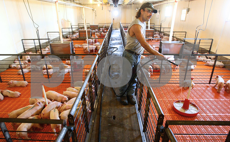 Kyle Bursaw – kbursaw@shawmedia.com<br /> <br /> Tim Martin, who manages the pigs for Carl Heide's farm, creates a gruel mixture from feed and water for the piglets on Wednesday, July 25, 2012 in DeKalb, Ill.