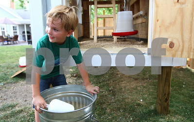 Kyle Bursaw – kbursaw@shawmedia.com  Blake, 5, looks to his father, Brandon Wiegartz, who gave Blake permission to scoop some feed out of the bin and spread out in the backyard of their Kirkland home for their seven chickens on Thursday, June 28, 2012.