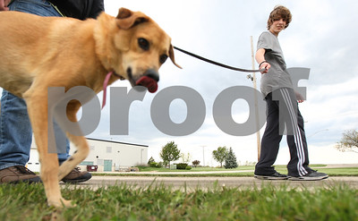 Kyle Bursaw – kbursaw@shawmedia.com  Volunteer Quinton Leitsch, 16, walks Sugar outside TAILS in DeKalb, Ill. on Wednesday, April 18, 2012.