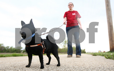 Kyle Bursaw – kbursaw@shawmedia.com  Deanne Winterton, 18, waits for classmate Megan Drendel to catch up while the two volunteer at TAILS walking dogs on Wednesday, April 18, 2012.