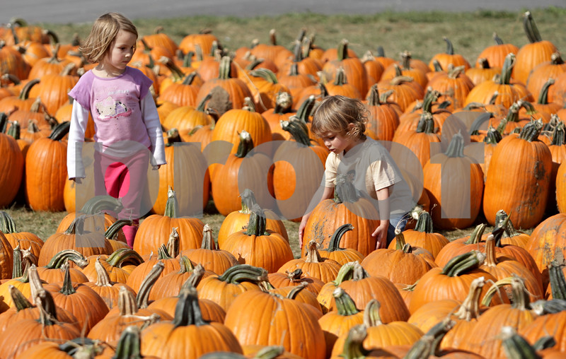 Rob Winner – rwinner@shawmedia.com<br /> <br /> Sisters Addie Osborne (left), 4, and Evie Osborne, 3, of St. Charles, look for the perfect pumpkin while visiting Kuipers Family Farm in Maple Park Friday, Sept. 28, 2012.
