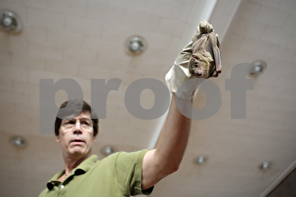 Rob Winner – rwinner@shawmedia.com<br /> <br /> Dan Peterson holds his Egyptian Fruit Bat during his Incredible Bats presentation at Haish Gym in DeKalb Saturday afternoon.<br /> <br /> Saturday, Oct. 20, 2012