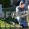 Kyle Bursaw – kbursaw@shawmedia.com<br /> <br /> Kevin Haish fastens a skeleton to fence while putting together his elaborate Halloween decorations at his Sycamore home on Monday, Oct. 29, 2012.
