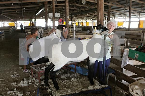 Rob Winner – rwinner@shawmedia.com<br /> <br /> (From left to right) Carolyn Hart and her husband Steve Hart, of Marietta, work alongside Myrna Sanburg, of Gilson, prepare their sheep for the 125th Sandwich Fair on Monday afternoon.
