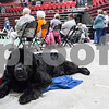 "Erik Anderson - For the Daily Chronicle <br /> Christine Brigham's Newfoundland, known as ""VN CH BlueMoon's Foreign Affair, CD WRD DD,"" lays on the floor in between the Newfoundland showing while at the Kennel Club of Yorkville - Dog Show at the NIU Convocation Center in DeKalb on Saturday, April 6, 2013."