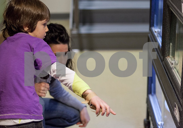 """Erik Anderson - For the Daily Chronicle <br /> Otto Rizzi, 8, and his mother, Tracy, of Kaneville look at """"Lenny,"""" a European Legless Lizard during the themed Earth Day event for Den #12, Elburn Pack #107's visit to The Midwest Museum of Natural History in Sycamore on Sunday, April 21, 2013."""