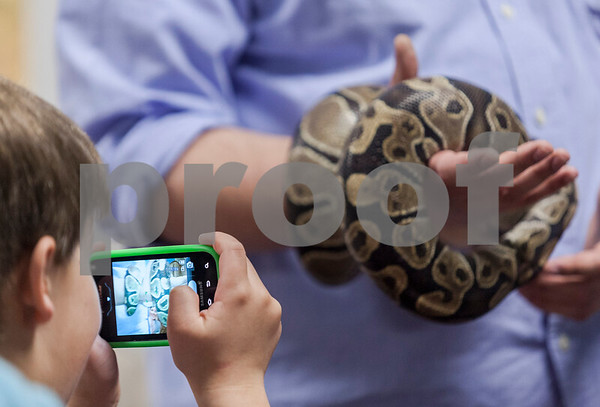 "Erik Anderson - For the Daily Chronicle <br /> Maxwell McCoy, 6, of North Aurora takes a photo of ""Daisy,"" the ball python, being held by Guest Services member Philip Krepel during the themed Earth Day event for Den #12, Elburn Pack #107's visit to The Midwest Museum of Natural History in Sycamore on Sunday, April 21, 2013."