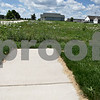 Monica Maschak - mmaschak@shawmedia.com<br /> A sidewalk ends before the unruly grass and weeds of several vacant lots, nestled between two homes, begins in the Riverbend subdivision in Genoa. Of the three subdivisions in the city, the Riverbend has the most vacant lots. Total, Genoa has about 300 vacant lots.