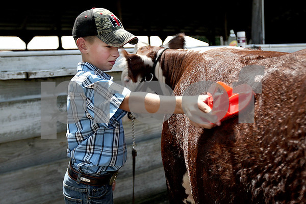 Monica Maschak - mmaschak@shawmedia.com<br /> Mark Hopkins, 10, of Lindenwood, washes down his hereford steer, Herf, after showing him at the 4-H Fair in Sandwich on Saturday, August 3, 2013.