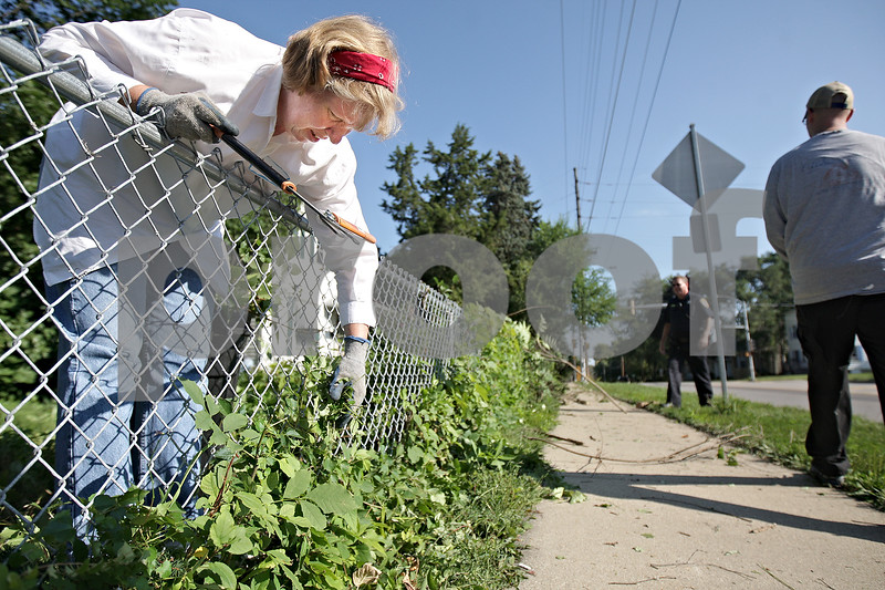 Monica Maschak - mmaschak@shawmedia.com<br /> JoAnn Minter, from the neighborhood, pulls overgrown weeds from the fench surrounded the property on the corner of 7th Street and Fisk Avenue in DeKalb on Saturday, August 10, 2013. About 20 volunteers from a neighborhood watch group and from the city of DeKalb helped to clear foliage for four hours.
