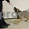 Monica Maschak - mmaschak@shawmedia.com<br /> Police K-9 Tac loves to play when he is not training. Tac is trained in obedience, recognizing the odor of narcotics, article searches and apprehension work. Officer Aaron Gates, who works with Tac, uses Dutch commands to train the nearly two-year-old dog.