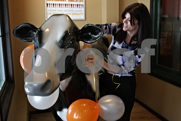 Rob Winner – rwinner@shawmedia.com<br /> <br /> Co-owner Debbie Witmer decorates the cow near the entrance of O'Leary's Restaurant and Pub ahead of Tuesday night's New Year's celebration in DeKalb, Ill.