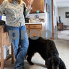 Erik Anderson - For the Daily Chronicle<br /> <br /> Owner Lynn Kullman, a local dog handler and veterinarian talks about the upkeep of Gatlin and details on the Westminster Dog Show in which he will be competing in while at her house in Cortland on Friday, February 8, 2013.