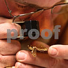 Kyle Bursaw – kbursaw@shawmedia.com<br /> <br /> Tom Fuller, a buyer with the Midwest Gold and Silver Refinery, uses a loupe to examine a piece of gold from a person looking to exchange it for cash at the Best Western in DeKalb, Ill. on Tuesday, Feb. 19, 2013