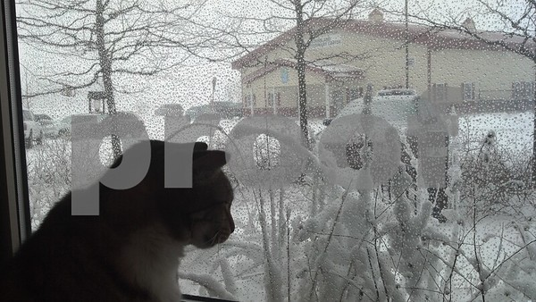 "Submitted Julianne Morelli <br /> <br /> ""This kitty was watching it snow from his cozy perch at Tails."""