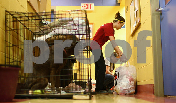 Kyle Bursaw – kbursaw@shawmedia.com<br /> <br /> TAILS volunteers Lindsay Stager (front) and Jillian Gray put the stock away from a recent pet food donation in a hallway with multiple dog crates in it on Friday, Jan. 4, 2013. The crates in the hallway are just one way TAILS utilizes the space to house more dogs at times when they take on large quantities at once, such as the 282 from Oklahoma shelters that came in October, about 127 of which were adopted in the first two days and some put into foster homes outside of the shelter.