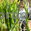 Kyle Bursaw – kbursaw@shawmedia.com<br /> <br /> Joseph Mauck checks out the YDrop display, which demonstrates how the product moves inside of a mock cornfield at the Northern Illinois Farm Show at the Convocation Center on Thursday, Jan. 10, 2013.