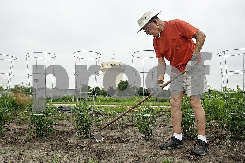 """Rob Winner – rwinner@shawmedia.com<br /> <br /> DeKalb resident Will Brown uses a hoe to turn over soil and to remove weeds from his garden at the DeKalb Garden Rental Plots located on West Dresser Road on Wednesday morning. """"I find it relaxing,"""" said Brown who has rented a plot for about seven years. Brown grows cucumbers, tomatoes, peppers, onions and squash on his plot."""