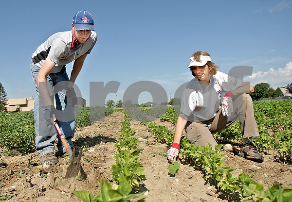 Monica Maschak - mmaschak@shawmedia.com<br /> Volunteers Scott Setchell and Carey Boehmer pull weeds in the rows of beans at one of the DeKalb County Community Gardens on Bethany Road in DeKalb on Friday, July 19, 2013. The organization more than doubled the amount of gardens in their second year from 16 to nearly 40.