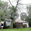Rob Winner – rwinner@shawmedia.com<br /> <br /> On Tuesday morning, Sycamore resident Tammy Diehl looks up at one of her two ash trees in her yard which has been damaged by the destructive emerald ash borer. Much of the tree is bare and the bark is beginning to peel away from the tree.<br /> <br /> Tuesday, July 23, 2013<br /> Sycamore, Ill.