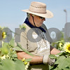 Monica Maschak - mmaschak@shawmedia.com<br /> Executive Director of DeKalb County Community Gardens Dan Kenney checks on the sunflowers at one of the community gardens on Bethany Road in DeKalb on Friday, July 19, 2013. The organization more than doubled the amount of gardens in their second year from 16 to nearly 40.