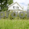 Rob Winner – rwinner@shawmedia.com<br /> <br /> Grass going to seed is seen in a yard located on the 100 block of Prairie Street in Genoa, Ill., Tuesday, June 4, 2013.