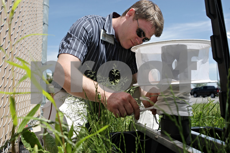 Rob Winner – rwinner@shawmedia.com<br /> <br /> Vince Leonforte, environmental health practitioner for the DeKalb County Health Department, collects a mosquito trap near West Dresser and North Annie Glidden roads in DeKalb, Ill., Friday, June 14, 2013. The mosquitos will be ground up and tested for West Nile virus.