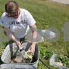Rob Winner – rwinner@shawmedia.com<br /> <br /> Jennifer Corbin washes off cauliflower for the Barb Food Mart at the Outreach Garden near the county buildings on North Annie Glidden Road in DeKalb, Ill. on Thursday, June 20, 2013, while volunteering for the Day of Caring sponsored by the Kishwaukeee United Way.