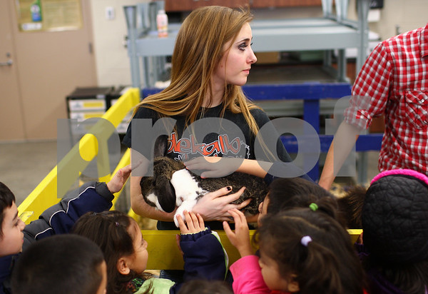 Kyle Bursaw – kbursaw@shawmedia.com<br /> <br /> DeKalb High School student Courtney Donnelly holds a rabbit as students visiting from Founders Elementary pet it during the school's Future Farmers of America Barnyard Zoo on Friday, Feb. 22, 2013. During the two-day show, students from within the high school and around the district get to come and interact with and learn about various animals.
