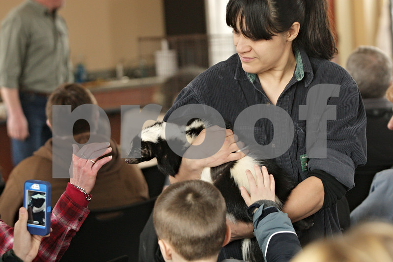Rob Winner – rwinner@shawmedia.com<br /> <br /> Renee Cajandig, an assistant at Big Run Wolf Ranch, holds Kirby Jr., a striped skunk, for guests to get an up-close look at during a Midwest Museum of Natural History event at the DeKalb County Community Foundation in Sycamore, Ill., Saturday, March 16, 2013.