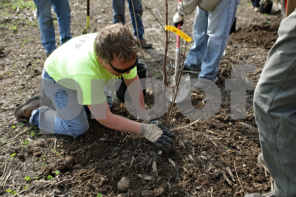 Rob Winner – rwinner@shawmedia.com<br /> <br /> Kevin Bock of the DeKalb Park District helps plant a Buttonbush along the DeKalb Nature Trail near Sycamore Road and Greenwood Acres Drive in DeKalb, Ill., Thursday, May 2, 2013.