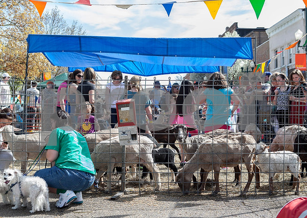 Erik Anderson - For the Daily Chronicle<br /> Parents and children have fun in the petting area feeding the numerous animals with food during the 16th annual Cinco De Mayo Festival in downtown Sycamore behind Taxco restaurant on Sunday, May 5, 2013. The festival is open to the public Sunday, May 5th from 1pm-9pm.