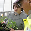 Rob Winner – rwinner@shawmedia.com<br /> <br /> Sophomore Sam Sauber (left) helps Jerry Pelan choose tomato plants inside the Sycamore High School greenhouse on Thursday, May 9, 2013. The plant sale will continue until Saturday, May 18.