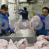 Rob Winner – rwinner@shawmedia.com<br /> <br /> Workers at Ho-Ka Turkey Farm in Waterman place dressed turkys into a tub at the end of an assembly line on Tuesday, Nov. 5, 2013.