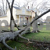 Rob Winner – rwinner@shawmedia.com<br /> <br /> A tree damaged by Sunday's storms is seen on the 500 block of Grove Street in DeKalb on Monday, Nov. 18, 2013.