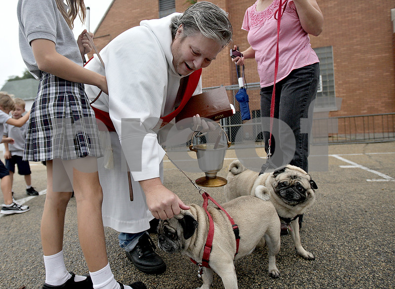 Monica Maschak - mmaschak@shawmedia.com<br /> Deacon Lee Deatherage blesses two pugs with holy water at a blessing of pets in recognition of Feast Day by Saint Francis of Assisi at St. Mary's Catholic Church in Sycamore on Friday, October 4, 2013.