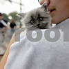 Monica Maschak - mmaschak@shawmedia.com<br /> Winnie, a four-to-five-week-old kitten, awaits to be personally blessed by Deacon Lee Deatherage at a blessing of pets in recognition of Feast Day by Saint Francis of Assisi at St. Mary's Catholic Church in Sycamore on Friday, October 4, 2013.