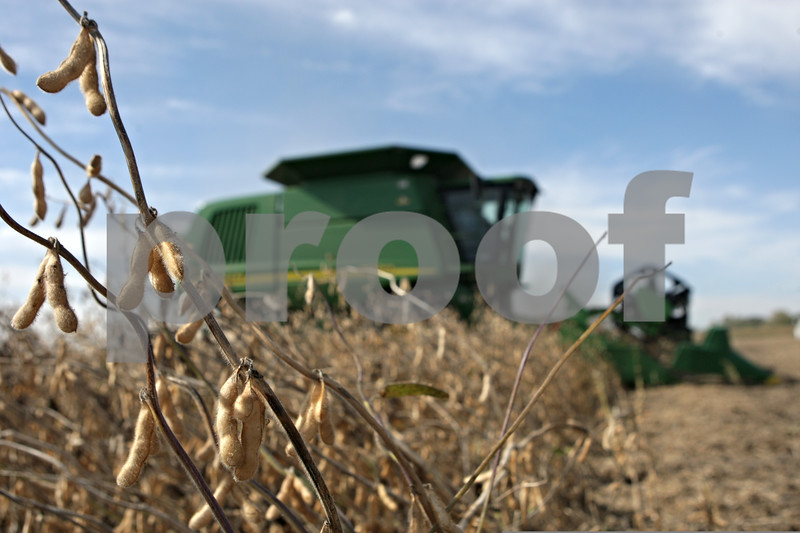 Rob Winner – rwinner@shawmedia.com<br /> <br /> Soybeans are harvested by Gene Miller in his combine near Old State and Larson roads in Sycamore, Ill., Thursday, Oct. 10, 2013.
