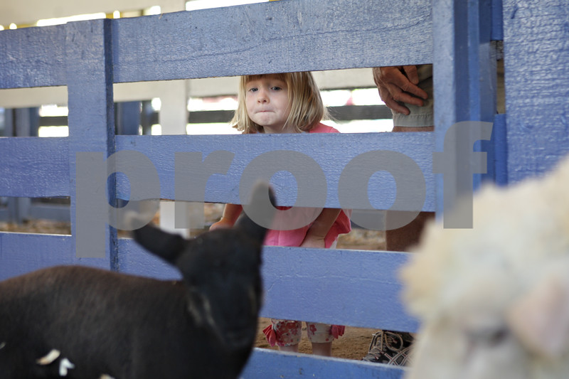 Rob Winner – rwinner@shawmedia.com<br /> <br /> Elouise Lewin, 3, of Downers Grove looks at the sheep inside the FFA Farm Zoo at the Sandwich Fair on Wednesday, Sept. 4, 2013.