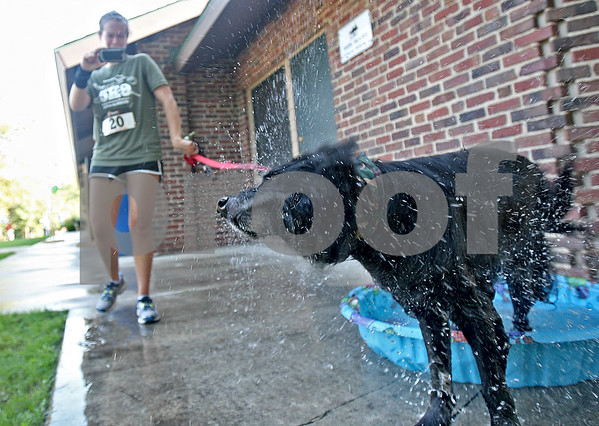 Monica Maschak - mmaschak@shawmedia.com<br /> Chance, an 11-year-old mutt, shakes off water at the dog cooling station after running a 5K with his owner, Bridget Domenighini, at Hopkins Park on Friday, September 7, 2013. TAILS Humane Society held the dogwalk, funfest and 5K-9 Run to raise money to support its veterinarian program.