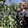 Monica Maschak - mmaschak@shawmedia.com<br /> Luke Cunningham, 13, of La Grange, bites into a freshly picked Early Fuji apple at Jonamac Orchards on Saturday, September 14, 2013. The Orchards offer barnyard activities and apple picking through October.