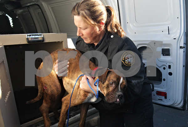 Rob Winner – rwinner@shawmedia.com<br /> <br /> DeKalb County Animal Control warden Jenny Eisman lifts a stray boxer dog from the back of her work van to be examined at the Malta Veterinary Hospital on Monday, Jan. 13, 2014. The boxer, which appeared to have suffered from a broken leg, was picked up by Eisman at a farm north of Waterman.