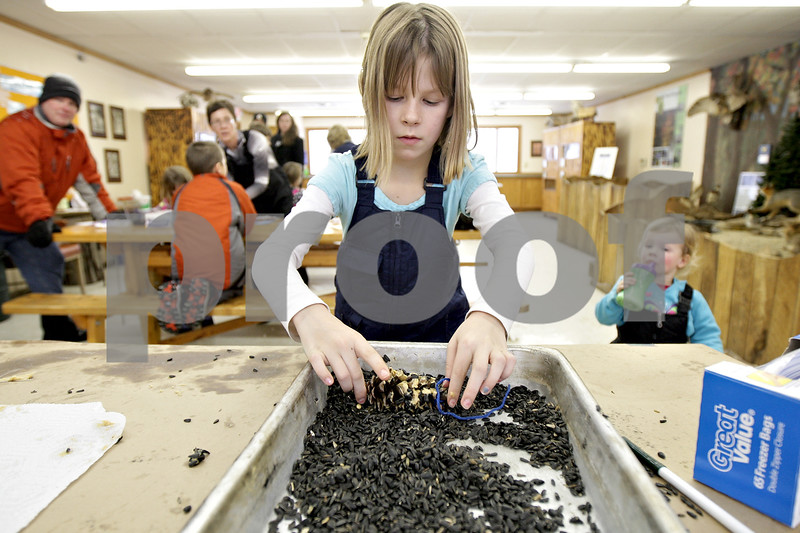 Monica Maschak - mmaschak@shawmedia.com<br /> Reagan Vander Bleek, 9, of DeKalb, makes a pine cone bird feeder at the annual Winterfest hosted by the University of Illinois Extension at the Natural Resource Education Center in Russell Woods Forest Preserve in Genoa on Saturday, January 18, 2014.
