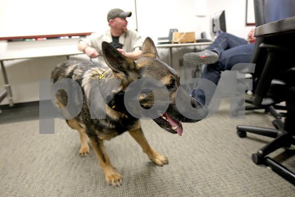 Monica Maschak - mmaschak@shawmedia.com<br /> Retired Baltimore County Sheriff K-9 Laky tries to roam the room with handler Dave Crawford, disabled Navy veteran, behind him after a presentation given by the students on Save-a-Vet at Barsema Hall on Thursday, March 6, 2014.