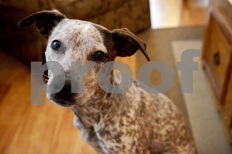 dnews_0521_DogBite3.jpg