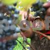 dnews_1009_Wineries1DG