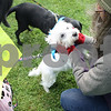 dnews_adv_MuttStrut10