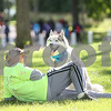 dnews_adv_MuttStrut9