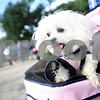 dnews_adv_MuttStrut3