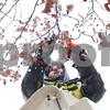 dnews_1203_SnowySycamore2